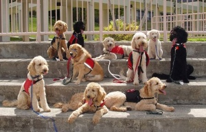Nine service dogs wearing jackets.
