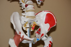 Graphic shows a three dimensional model of the bones of the lower part of the spine, hips, and pelvis.
